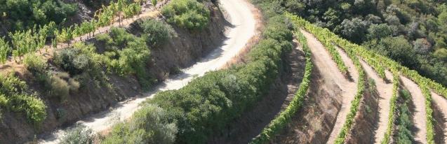L44 - Biodiversity in viticulture