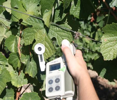 ADVID integra plataforma de apoio à gestão das alterações climáticas na vinha