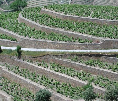 WETWINE - Cooperação transnacional para a conservação do património vitivinícola