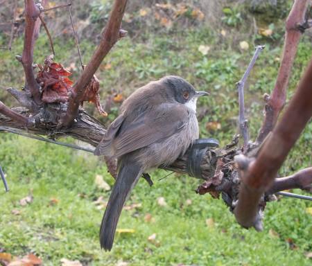 BioDiVine - Biodiversidade funcional em paisagens vitivinícolas