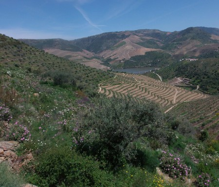 ECOVITIS – Maximizar os serviços de ecossistema das vinhas