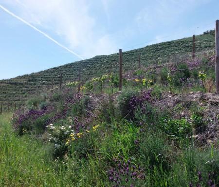 Infraestruturas ecológicas na proteção biológica contra pragas da vinha