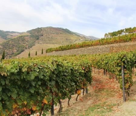 INFRAVINI - Precision viticulture service