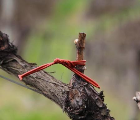CSinDouro - Confusão sexual contra a traça-da-uva em viticultura de montanha: caso particular da Região Demarcada do Douro